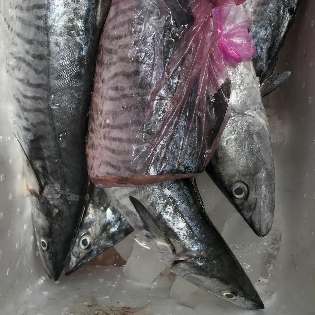 Cá Thu 5