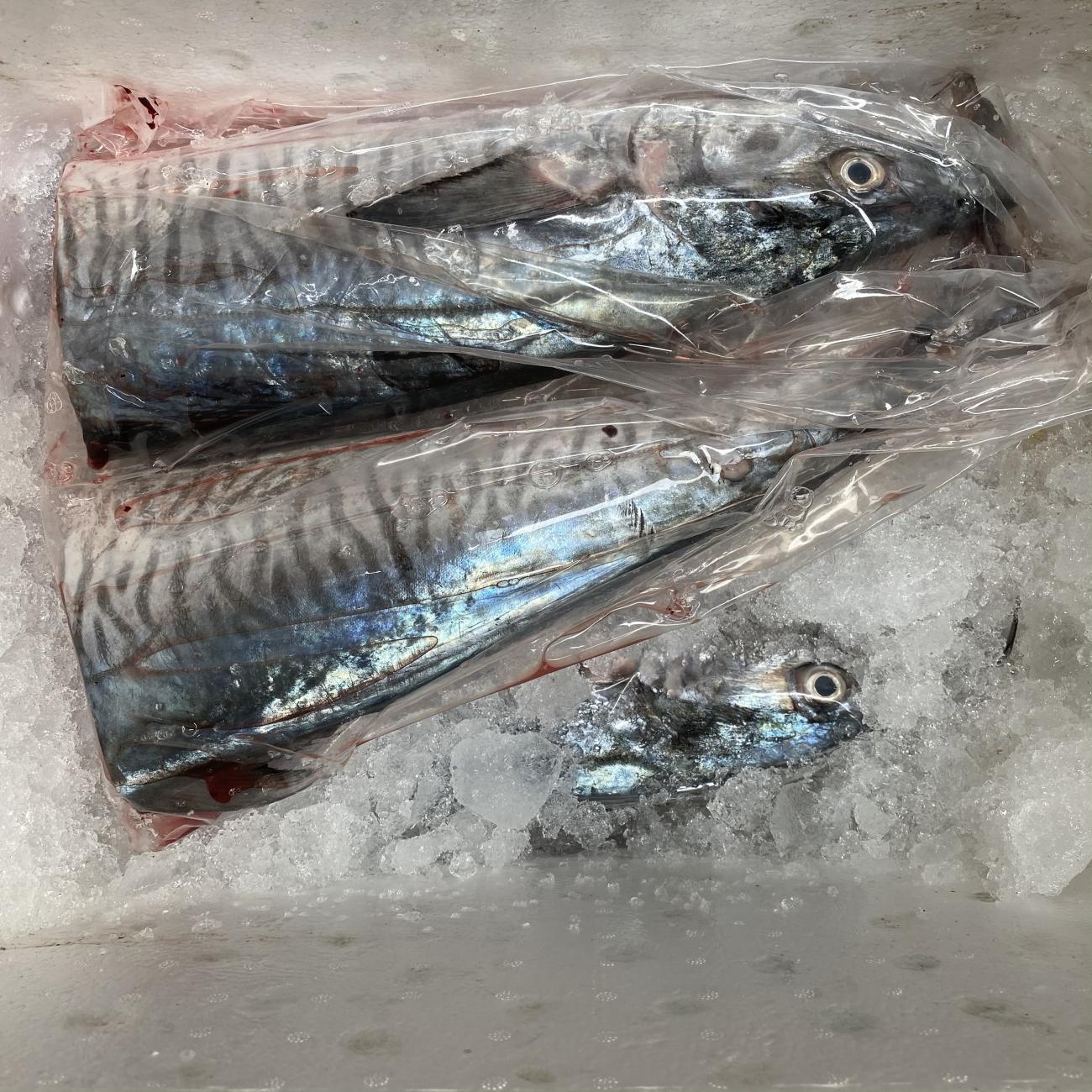 Cá Thu 4